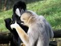 022-zoo-overloon