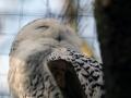 027-zoo-overloon