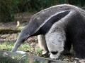 034-zoo-overloon